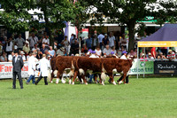 Team of Five Beef Breeds