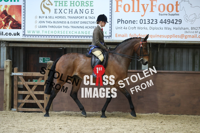 1st Class Images | RIDING HORSE CHAMPIONSHIP