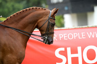 C114D 153CM SHOW HUNTER PONY