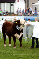 Elite Junior Bull Beef Breeds