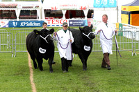 RWAS Exhibitor Bred Owned Pairs