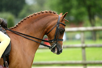 C114A 122CM SHOW HUNTER PONY