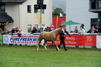 S.37 WELSH PONIES YOUNSTOCK CHAMPIONSHIP