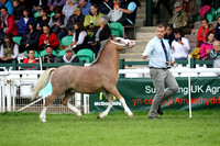 S.10 WELSH MOUNTAIN YEARLING CHAMPIONSHIP