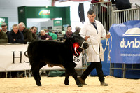 BABY BEEF STEER CHAMPIONSHIP