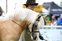 C203 WELSH PONIES LEAD REIN